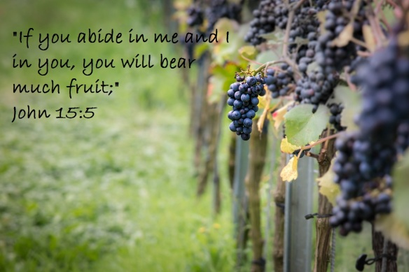abide-grapes-photo